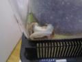 Snail, #A675