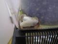 Snail, #A671