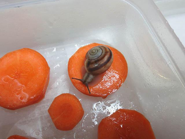 Snail, #1364