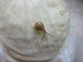 Snail, #1370