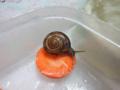 Snail, #1385