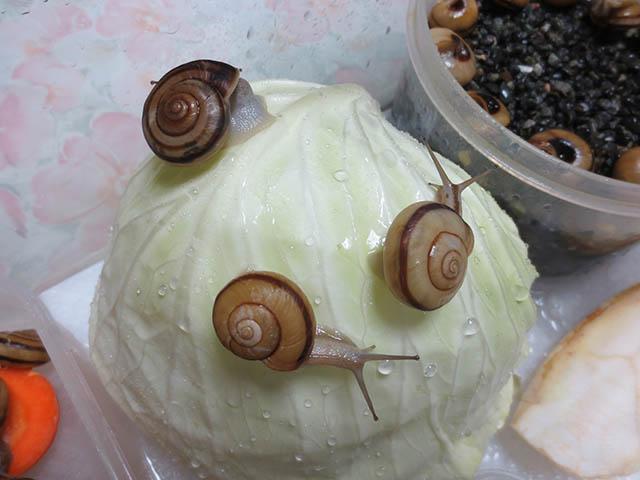 Snail, #1391