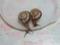 Snail, #1405
