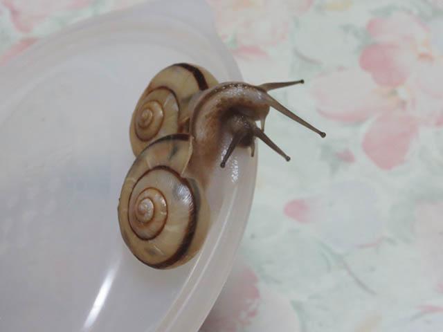 Snail, #1408