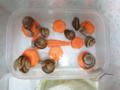 Snail, #1435