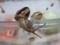 Snail, #1567