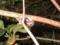 Snail, #1821 (Closeup)