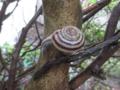Snail, #2065