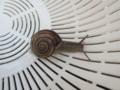 Snail, #2085