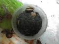 Snail, #2188