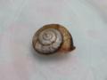 Snail, #2205