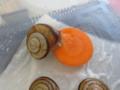 Snail, #2225