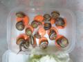 Snail, #2515