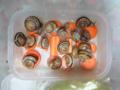Snail, #2629