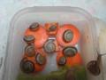 Snail, #2780