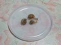 Snail, #2754