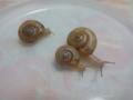 Snail, #2758