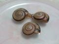 Snail, #2769