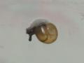 Snail, #2868 (Closeup)
