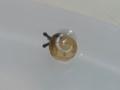 Snail, #2879 (Closeup)