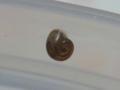 Snail, #2891 (Closeup)