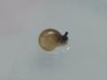 Snail, #2948 (Closeup)