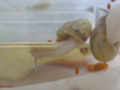 Snail, #3014