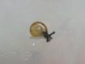 Snail, #3034 (Closeup)