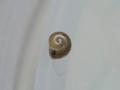 Snail, #3086 (Closeup)