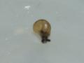 Snail, #3092 (Closeup)