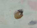 Snail, #3530 (Closeup)