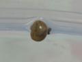 Snail, #3525 (Closeup)