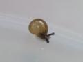 Snail, #3723 (Closeup)