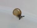 Snail, #3724 (Closeup)
