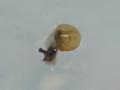 Snail, #3753 (Closeup)