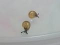 Snail, #3856 (Closeup)