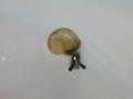 Snail, #3861 (Closeup)