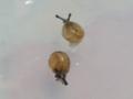 Snail, #3945 (Closeup)