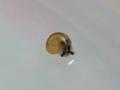 Snail, #3994 (Closeup)