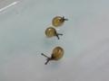 Snail, #4028 (Closeup)