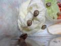 Snail, #4328