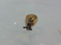 Snail, #4582 (Closeup)