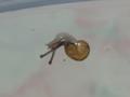 Snail, #4767 (Closeup)
