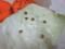 Snail, #4780 (Closeup)