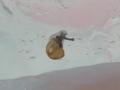 Snail, #4796 (Closeup)
