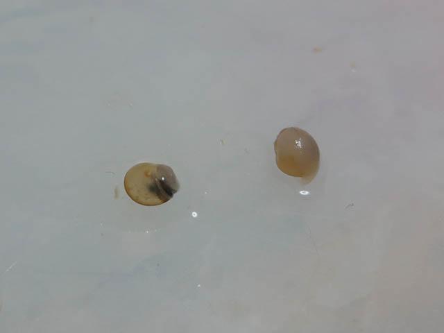 Snail, #4849 (Closeup)