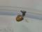 Snail, #4919 (Closeup)