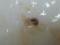 Snail, #4978 (Closeup)