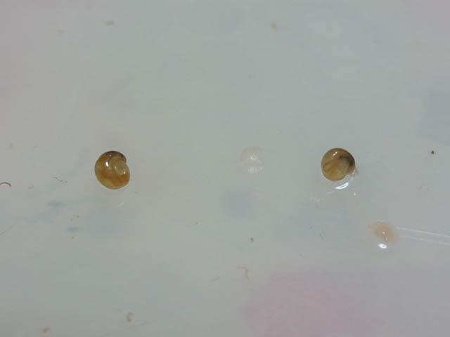 Snail, #5005 (Closeup)