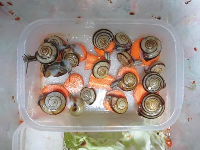 Snail, #4333